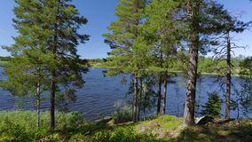 Gorgeous nature landscape view of lake with green tall trees on blue sky background. Sweden, Europe. stock video footage