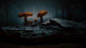 Mystical forest / magical mushroom scene. Gorgeous orbit shot of a mystical forest mushroom scene vector illustration