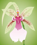 Gorgeous Orchid  in Green Background, Vector Illustration Stock Image