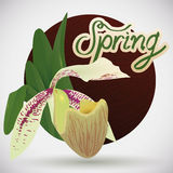 Gorgeous Orchid on Wooden Background, Vector Illustration Stock Image