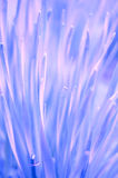 Gorgeous organic purple background Royalty Free Stock Photo