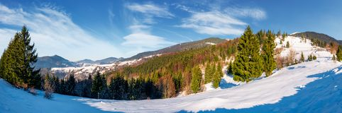 Gorgeous panorama of winter countryside. Beautiful scenery with spruce trees on snowy hillside. village in a distance at the foot of mighty Carpathian mountain Royalty Free Stock Images