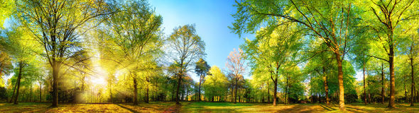 Gorgeous panoramic spring scenery with sunlit trees. Gorgeous panoramic spring scenery with the sun beautifully illuminating the fresh green foliage stock image