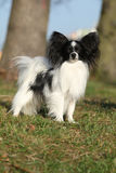 Gorgeous papillon in autumn Royalty Free Stock Images
