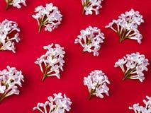 Gorgeous pattern of white lilacs. Gorgeous pattern of white lilacs on trendy red background. Top view. Flat lay Royalty Free Stock Photo