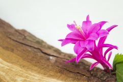 Gorgeous pink flower on a rustic wooden board Stock Photo