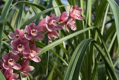Gorgeous pink orchids in green grass with natural light stock photo