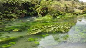 Pristine, clear and refreshing river stream in Waikato, New Zealand stock video