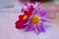 Gorgeous red and purple flowers. Big flowers with a deep color on a dinner table. Beautiful and colorful tiny bouqet stock photography