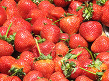 Gorgeous Ripe Strawberries at a Farm Stand. Red glistenening strawberries at a farm stand Royalty Free Stock Photo