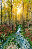Gorgeous scene of creek in colorful autumnal forest Stock Image