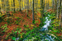 Gorgeous scene of creek in colorful autumnal forest Stock Photo