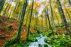 Gorgeous scene of creek in colorful autumnal forest Royalty Free Stock Photos