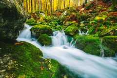 Gorgeous scene of creek in colorful autumnal forest Royalty Free Stock Images