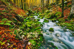 Gorgeous scene of creek in colorful autumnal forest Stock Photography
