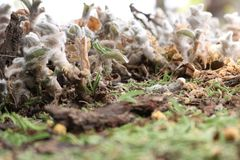 Gorgeous silky scene - macro shot stock image