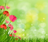 Gorgeous spring background with grass multiple bokehs Royalty Free Stock Photography