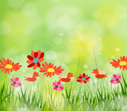 Gorgeous spring background with grass multiple bokehs Stock Image