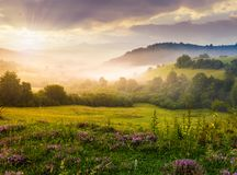 Gorgeous sunrise in Carpathian mountains. Gorgeous foggy sunrise in Carpathian mountains. lovely summer landscape of Volovets district. purple flowers on grassy Stock Photos