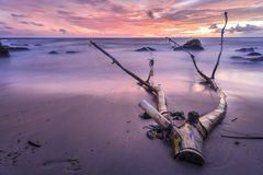 Gorgeous sunset with broken stumps and tree Royalty Free Stock Image