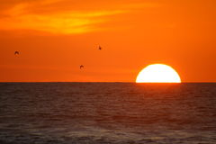 Gorgeous Sunset at Piha in Auckland New Zealand Stock Photography