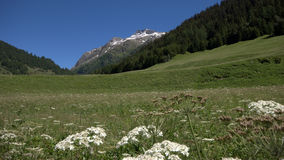 Gorgeous Swiss Binntal in summer. Look at the lovely Binntal (Switzerland Royalty Free Stock Photos
