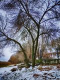 Gorgeous tall bald leafless tree covered in snow on a beautiful winter day.  royalty free stock photos