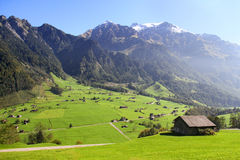 Gorgeous view of Alpine meadow Stock Image