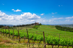 Gorgeous view on beautiful green vines Stock Images
