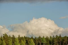 Gorgeous view of beautiful thunderclouds in blue sky above green tree tops. Beautiful nature backgrounds stock photos
