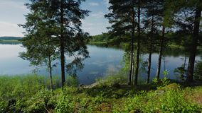 Gorgeous view on lake through tall trees. Gorgeous nature landscape background. Sweden,. Europe stock video footage
