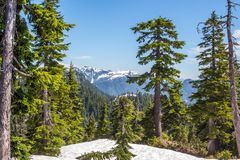 Mountainscape through the winter forest. Gorgeous view on mountains through trees of covered with snow winter forest Royalty Free Stock Images