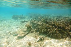 Gorgeous view of underwater world. Dead coral reefs, sea grass , white sand and turquoise water. Indian Ocean royalty free stock photography