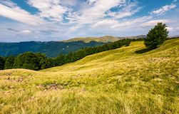 Gorgeous weather over grassy slopes of Carpathians. Wonderful mountain landscape with beech forests on hille in summer time. Location Svydovets mountain ridge Stock Photos