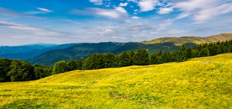 Gorgeous weather over grassy slopes of Carpathians. Wonderful mountain landscape with beech forests on hillside in summer time. Location Svydovets mountain stock photo