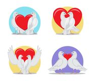 White Doves Couples with Heart Illustrations Set. Gorgeous white doves couples in love with big red heart between or behind them isolated cartoon flat vector Royalty Free Stock Images