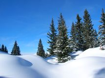 Gorgeous winter landscape with fresh snow, green snow-covered trees and a blue sky. In the Swiss Alps Stock Images