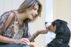 Gorgeous Woman with Swiss Mountain Dog Royalty Free Stock Photo