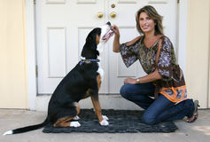 Gorgeous Woman with Swiss Mountain Dog Royalty Free Stock Image