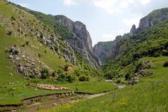 Gorges de Turda Photos libres de droits