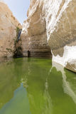 Gorges in the Negev desert Royalty Free Stock Image
