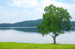 Gorgeus landscape with lonely tree Stock Photos