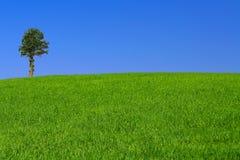 Gorgeus Landschaft mit einsamem Baum Stockfoto