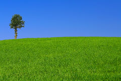 gorgeus samotne drzewo krajobrazu zdjęcie stock