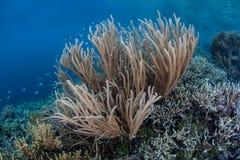 Gorgonian和微小的礁石鱼 免版税库存图片