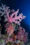 gorgonian obrazy stock