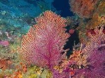 Gorgonian coral Royalty Free Stock Image