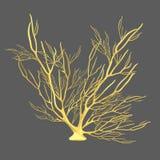 Gorgonian (Gorgonia) immagini stock libere da diritti