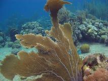 Gorgonians dans Bonaire Photo libre de droits