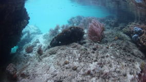 Gorgonians in the Shallows of Raja Ampat stock footage